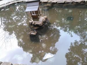 清らかなむすひ池の底に静かに沈んでいきました。